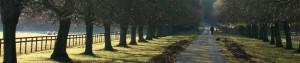 chestnut grove wines