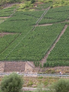 Steep Mosel slopes - 07-23-2013
