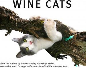 wineCats_intropage