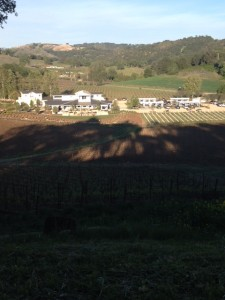 View of new Justin tasting room