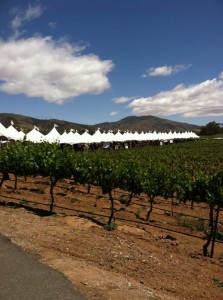 Reyes Winery vines and the welcoming tents photographed by Beth Greenwald.