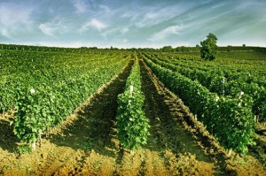 balkan_wine_1