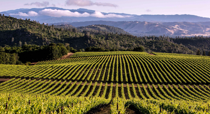 Green Medal Awards Announced: Sustainable Winegrowing Leadership