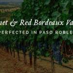 Paso Robles' Cabernet Sauvignon Gains Ground
