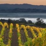 Russian River Valley Winegrowers to host Single Vineyard Night in San Francisco & Sacramento this November