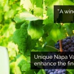 The Name of Your Winery: Maybe it Shouldn't BE Your Name