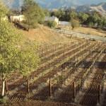Coolest Wine Education site EVER for SCV! (Vintage Eve Circa 12/2008)