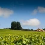Domaine Drouhin Oregon Celebrates 30th Anniversary