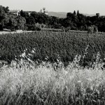 Ornellaia Celebrates 30th Anniversary of First Vintage (1985) and 10th Anniversary of Vendemmia d'Artista
