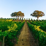 What and Where is the Wine Road?