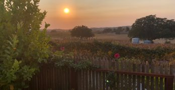 Paso Robles: Getting Comfortable at Grapestake Cottage and Vineyards