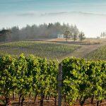 Van Duzer Corridor AVA Approval Shows Location Matters in Oregon