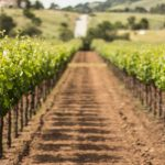 VERDE VINEYARDS AND TANK HOUSE  JOIN THE WINERIES OF SANTA CLARA VALLEY FAMILY