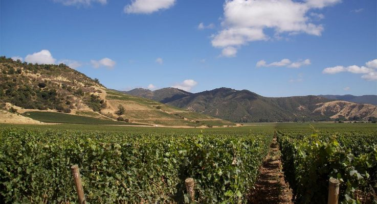 Visionary Chilean Winery VIK Awarded 2019 Wine Star