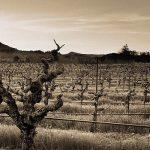 Perlis Picks: Membership with the Historic Vineyard Society