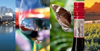 South African Wine Harvest Report 2020: Great Season, Remarkable Wines