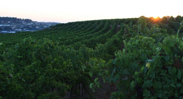 Interested in Wines From Israel? Free, Live-Streamed Wine Events Until July