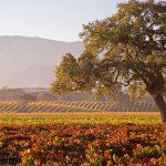 Savor Santa Barbara's Epicurean Experiences at Home