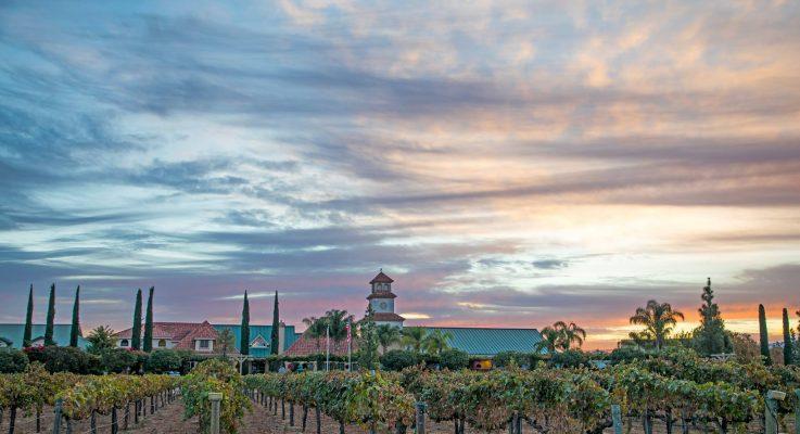 South Coast Winery Wins Big at 2020 Toast of the Coast