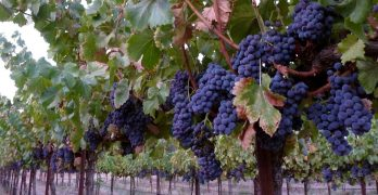 Recognition for Madera Wine Trail Vintners
