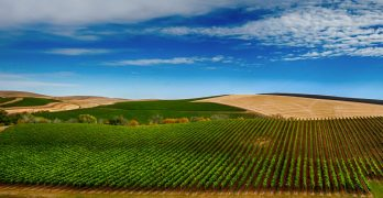 Walla Walla Valley Voted 'America's Best Wine Region' In The 2020 USA Today 10Best Readers' Choice Awards