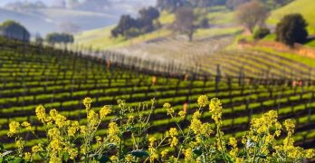 THE SANTA YNEZ VALLEY INVITES VISITORS TO TURN THE PAGE ON 2020
