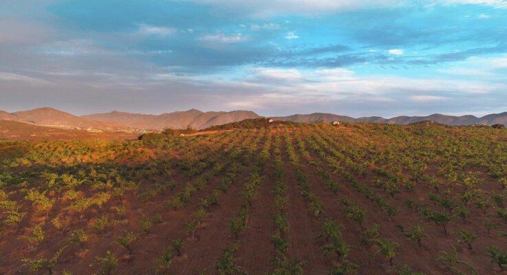 Baja California to Host Two Prestigious Wine Events